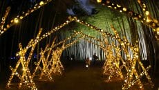 若竹の杜 若山農場 竹林ライティングショー