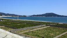 岩手県陸前高田 高田松原海水浴場