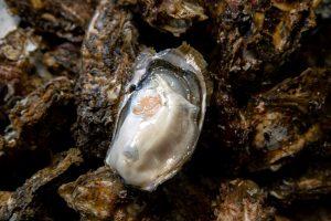 ASC認証(養殖エコラベル) 戸倉っこ牡蠣